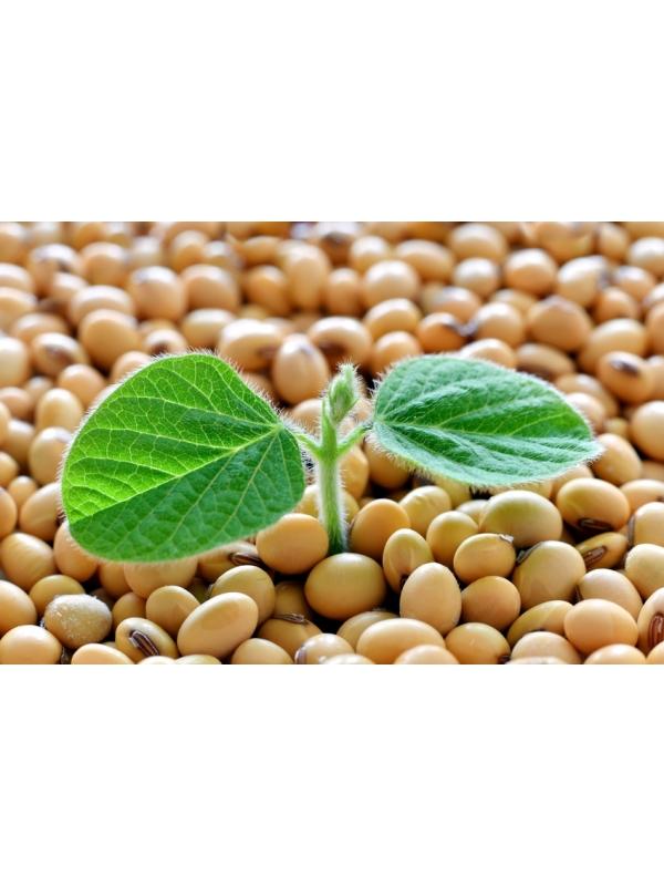 Nattokinaza 100 mg  NSK-SD®  (300 kapsułek) - suplement diety