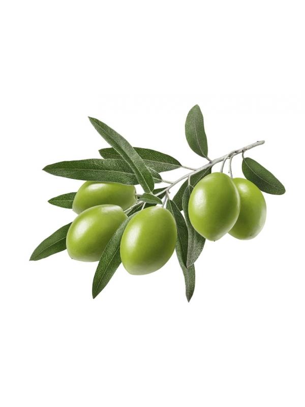 Ekstrakt z liści drzewa oliwnego Benolea (60 kapsułek) - suplement diety